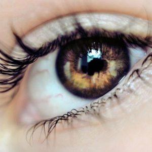 گیاهان دارویی مفید برای چشم