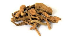 ریشه گیاه اسرول
